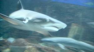 SharkFace2